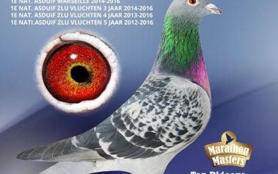 'Theo Daalmans, from Elsloo has the best ZLU-pigeon in 4 years'